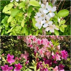 Spring time in my Garden