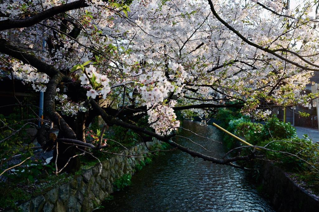 京都 高瀬川 2020