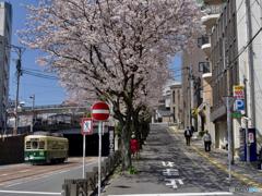 本日の:桜坂上る下る