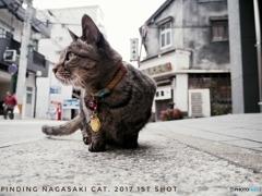 Finding Nagasaki Cat 2017 #1
