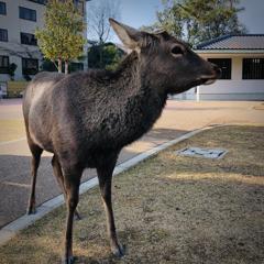 奈良の◯◯の青芝に