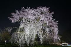 ブラタモリ 京都・祇園 放送記念(笑)