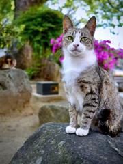 長崎ネコ歩き