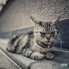 Break time : Finding Gion Cat
