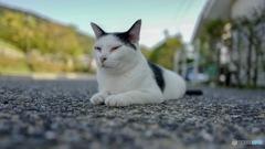 Unzen ネコ歩き : 長崎ネコ歩き 番外編