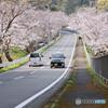 春が今年もやってきた 桜が綺麗にさいとるね 2019