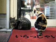 気まぐれな猫
