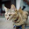 Finding Kyoto Cats : 梅宮大社 小梅かな?
