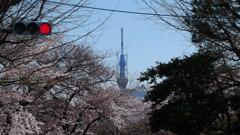 春色スカイツリー