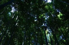 鎌倉報国寺 竹林