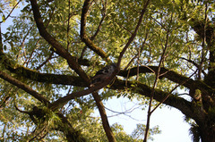 木の上はいかがですか?