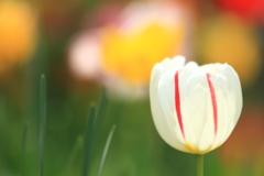 春の光を浴びて♪