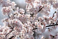 春の訪れⅠ