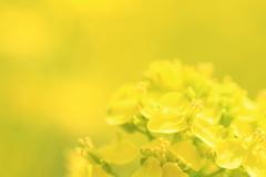 黄色い世界♪