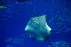 美ら海の生き物達