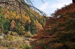 秋・・・紅葉