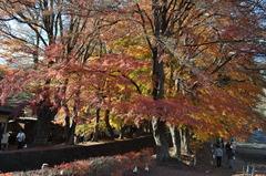 富士河口湖紅葉祭り_Vol6