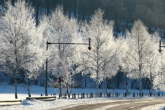 霧氷Road