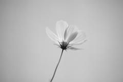 white tone