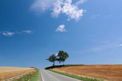 道の向こうへ~、出かけよう~♪