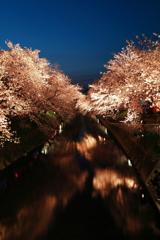 川 縁 夜 桜