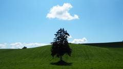 Summer one tree