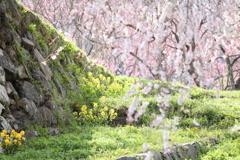 春 の 陽