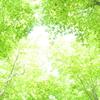 新緑の候 -season of new green leaves-