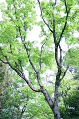 早 緑 の 候