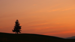 『Sunset Tree』