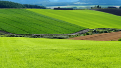 Green of Fields