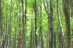The woods are alive  ~ 森は息づいている ~