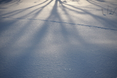 Pale shadow on snow surface