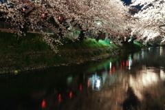桜流 (さくらながれ)