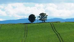 Stripes & Three Trees
