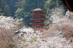 桜 源 郷