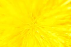 黄色い爆発