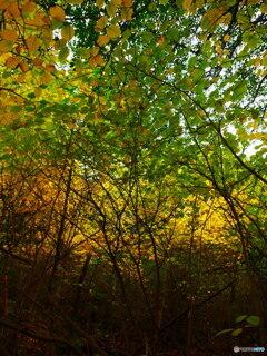 秋の茂み GX7Ⅱ