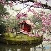 桜と社のある風景ドリーム・テイスト