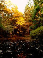 秋のスポットライト