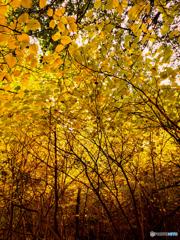 秋の茂み Galaxy Note9にて