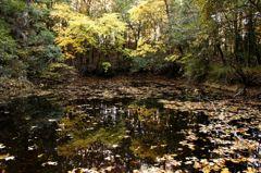 湖沼と紅葉のグラデーション共鳴