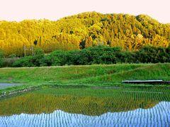 水田に映りし黄昏の山