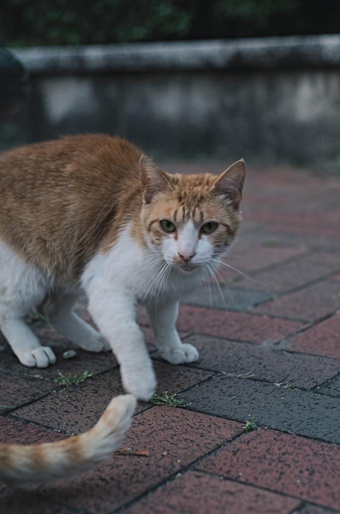 吾輩は猫である、ニャー # 1068