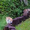 吾輩は猫である、ニャー # 633