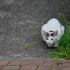 吾輩は猫である、ニャー # 763