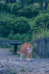 吾輩は猫である、ニャー # 1088