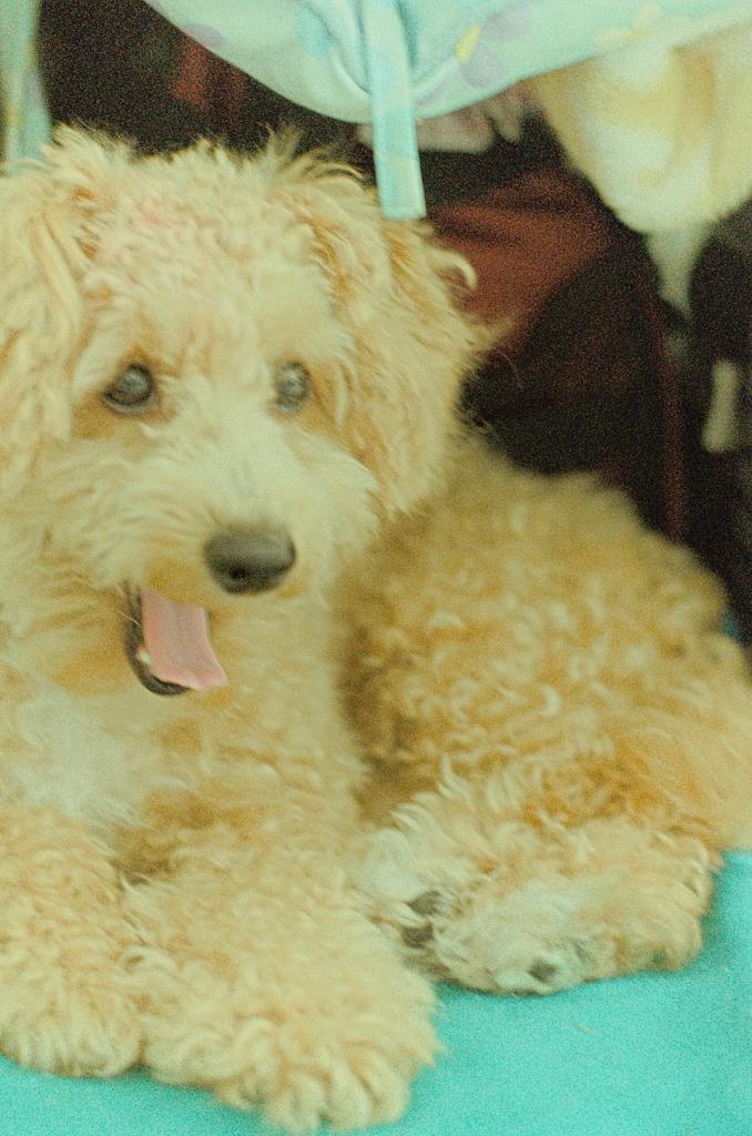 my pretty dog Ⅱ # 146