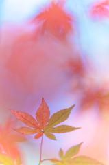 パステルな紅葉 ④