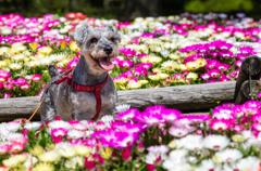 お花に囲まれて ②